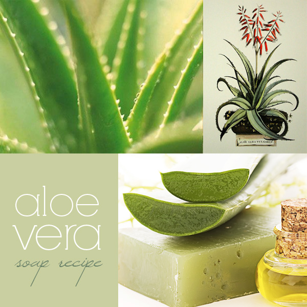 Aloe Vera soap recipe: how to make cold process aloe vera soap