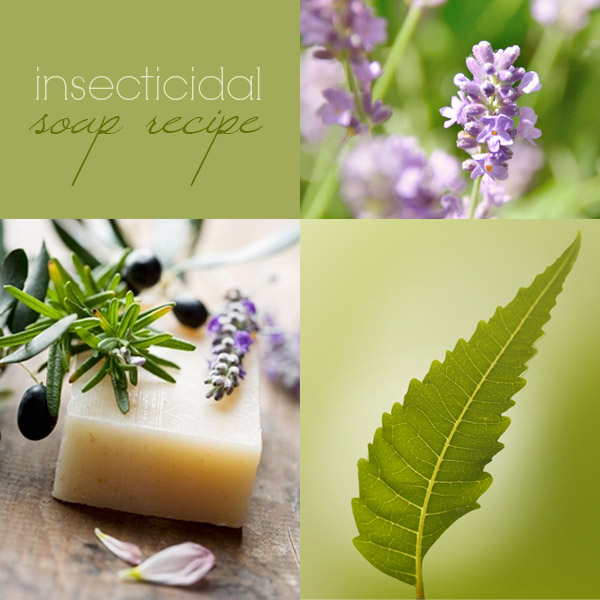 Insecticidal soap recipe: how to make insecticidal soap
